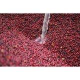 コーヒー生豆 グアテマラ エルソコッロ2