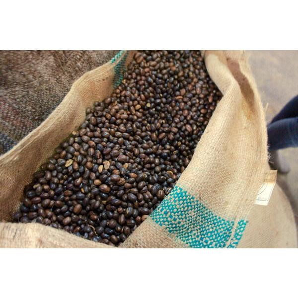 コーヒー生豆 マンデリン ロングベリー4